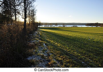 Frost on a Green Field in Sweden