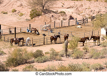 Horse corral - Horses in a desert corral await arriving...