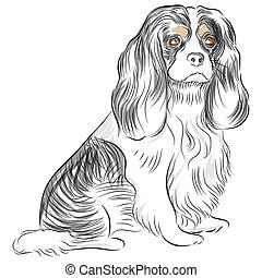 Pure Bred Cavalier King Charles Spaniel Dog Drawing - An...