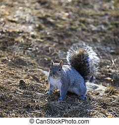rogue squirrel - squirrel that looks like it is ready to...