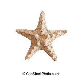 starfish is isolated on a white background