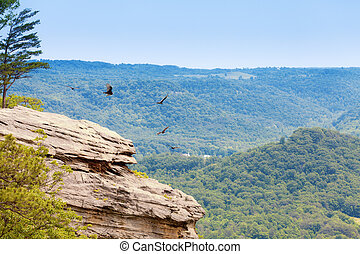 Cliff - Turkey vultures are circling over a cliff in Central...