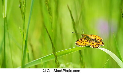 butterfly on the grass