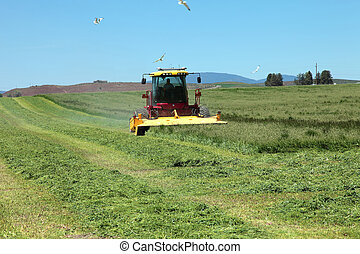 Organic agriculture and farmlands - Harvesting alfalfa in a...