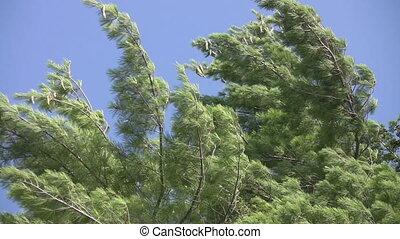 Trees in breeze.