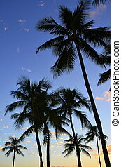 Sunset Palms - Vertical Vacation Image Of Tropical Palm...