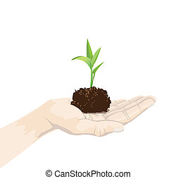 plant on palm - a hand is holding a seedling, isolated on...