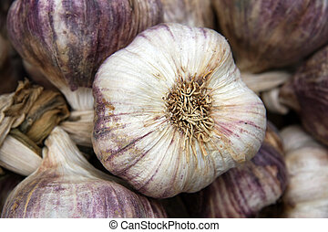 Garlic close-up