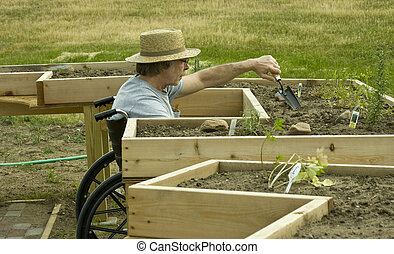 disabled gardener - man in a wheelchair tending a garden in...