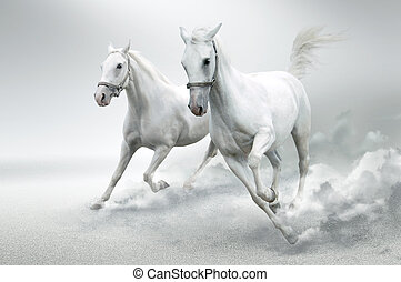 White horses - Photo of white horses in motion