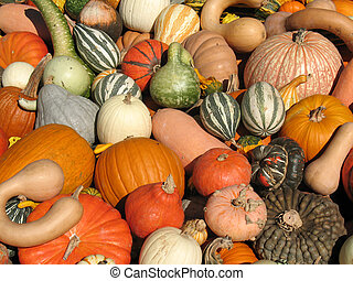 Pumpkins and gourds - Harvested pumpkins and gourds