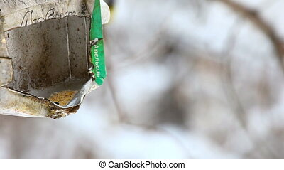 Birds in the park. - Birds eating seeds from the feeder.