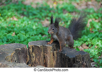 squirrel on a tree stump
