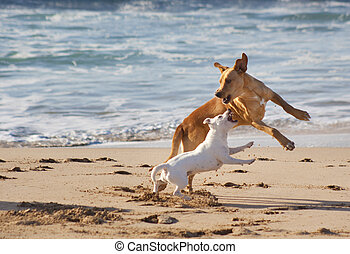 Dogs playing at the beach - Two dogs playing at the sandy...