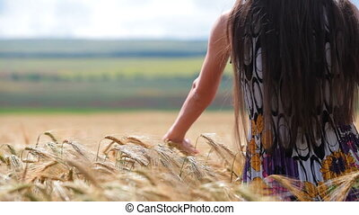 womans hand moving through wheat - female hand stroking the...