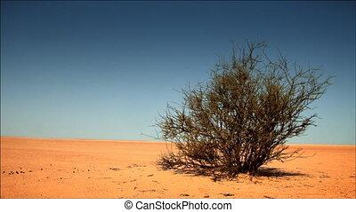 Desert - lonely bush in the desert,video HD 1080