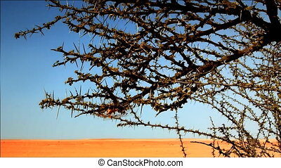 Desert - lonely bush in the desert,video HD 1080