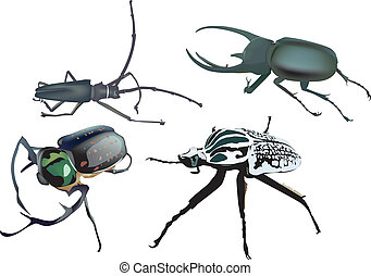 beetle ICON set