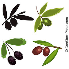 Olives - Collection of olive branches with fruits Vector...