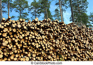 A Large Stack of Wood for Energy with Pine Trees Background...