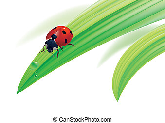 Ladybird on grass with water drops.