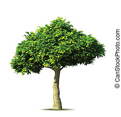 Green tree. Vector illustration isolated on white over