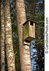 Bird house in birch tree