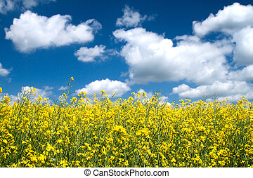 Flower field - Summer flower field and blue sky.