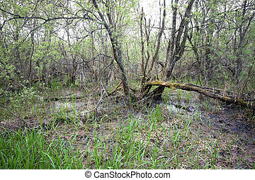 Swamp with broken tree covered in moss