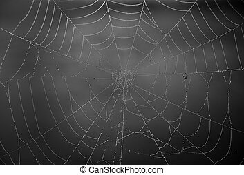 Cobweb - Morning dew in a cobweb