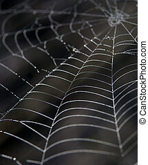 Cobweb with morning dew against dark background