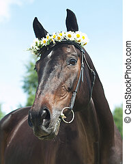 portrait of beautiful mare with daisy outdoor sunny day