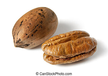 Pecan Nut - Pecan nuts - Carya illinoinensis Isolated on...