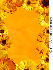 Wild Orange Flower Background