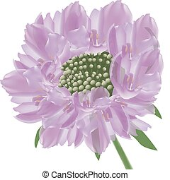 purple panel flowers - purple panel flowers isolated white...