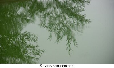 Rain drops fall in water of puddle Tree reflection in water...