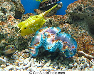 Giant Clam and Fish - Giant Clam and Yellow Marine Fish