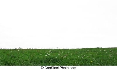 Newlywed pair walks on grass in front of cloudy white sky,...