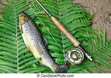 Brown trout and rod with reel