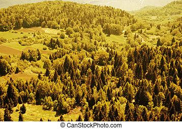 Forest green alpine