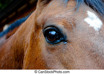 eye of horse curious and sincere