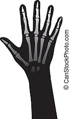 Hand anatomy - Open hand anatomy vector illustration on...