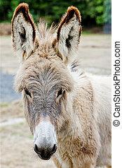 donkey, Navarre, Spain