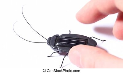 vibrating toy black beetle with solar battery on white
