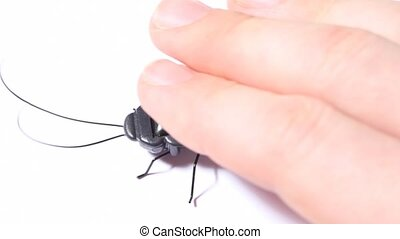 hand and vibrating toy black beetle with solar battery on...