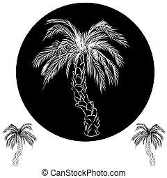 palma, albero, disegno