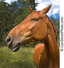 Brown horse with a proud expression