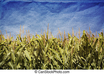 Grunge Corn Field - Grunge technique of a corn field with a...