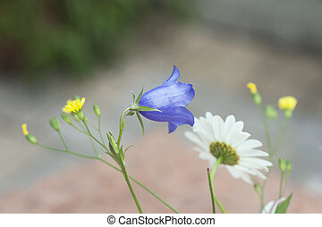 Summer flowers - Wild summer flowers, e.g. bluebell and...