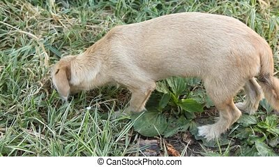 Stray dog licks box with yogurt in grass. - Stray dog licks...